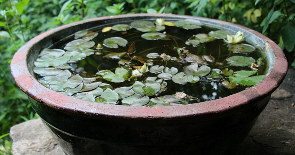 Jardin d'eau en bassin
